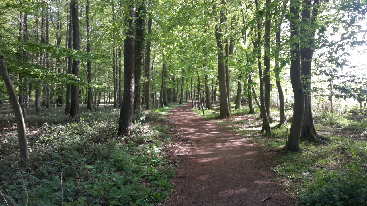 Der schöne Wald